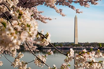 Washington Monument during the Cherry Blossom Season - NPS photo