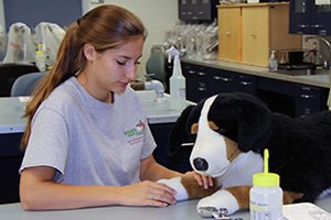LCBF student in veterinary technology class
