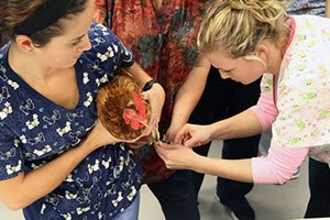 Vet Tech students working with a rooster