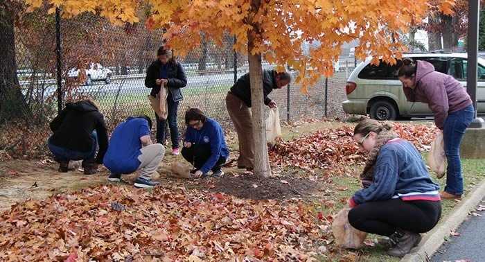 Campus clubs gather acorns for local Wildlife Center